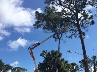 tree service daytona beach florida