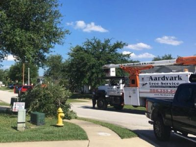 tree service deland fl