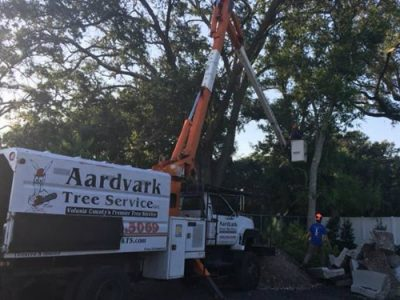 tree service port orange fl