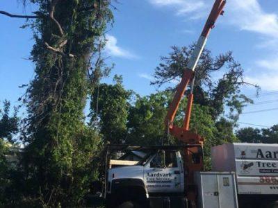 tree service port orange florida