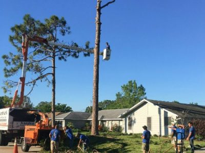 tree trimming port orange fl