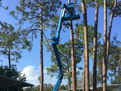tree trimming port orange florida