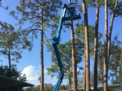 tree trimming port orange florida